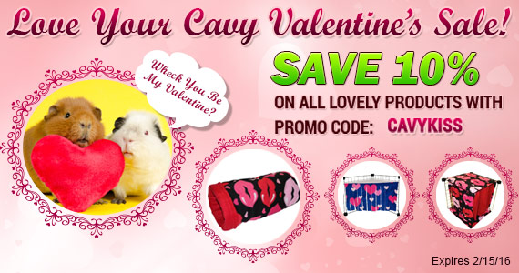 Love Your Cavy Sale!  Save 10% with Promo Code CavyKiss