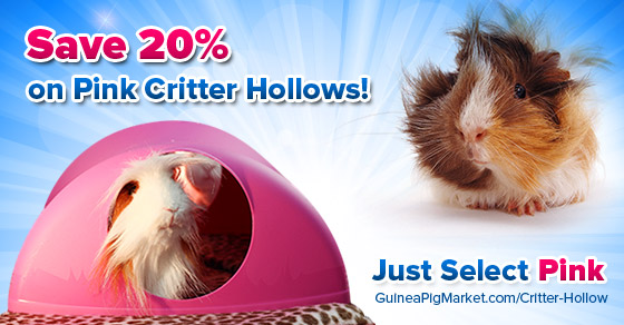 Pink Critter Hollows on Sale now