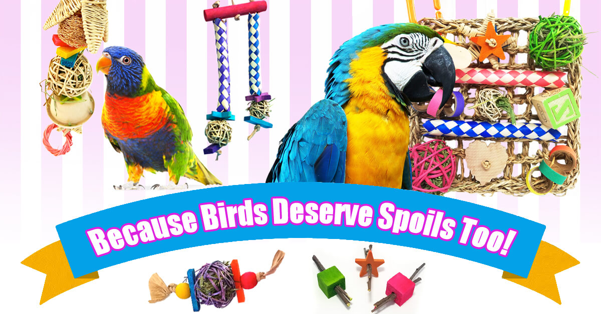 Chew Toys for Birds