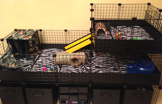 guinea pig cage showing zebra fleece flippers