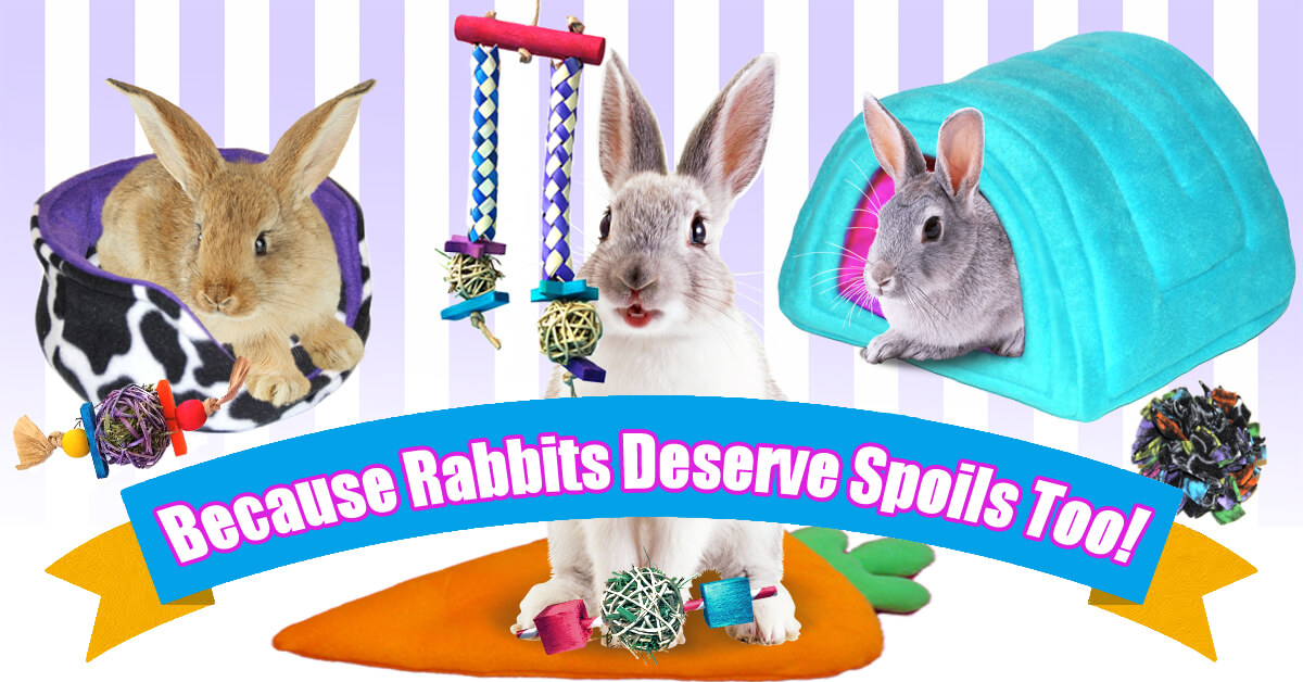 Cage Bedding, Toys and Accessories for Rabbits