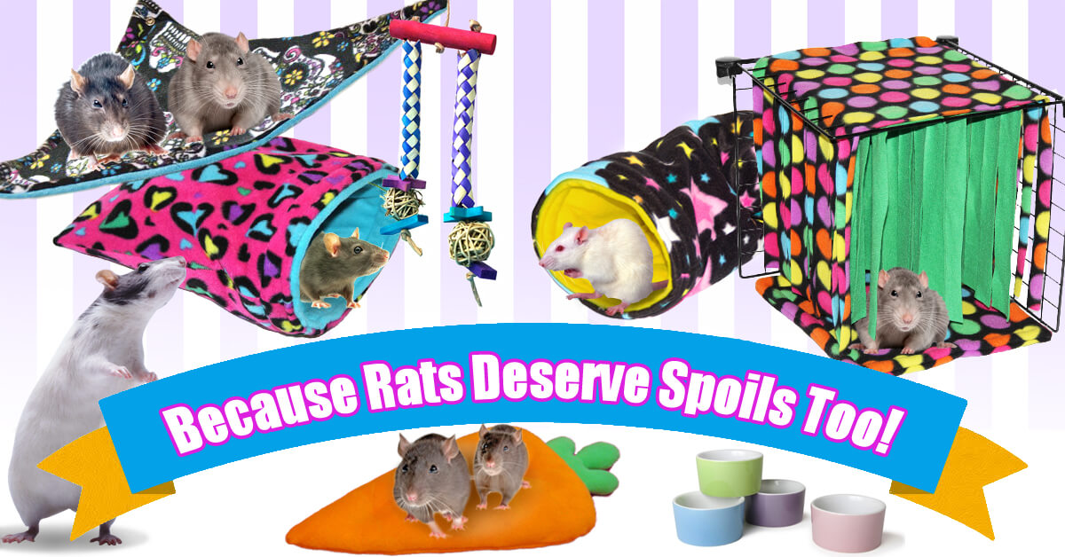 Cage Accessories and Toys for Rats