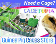 Cagetopia at Guinea Pig Cages Store