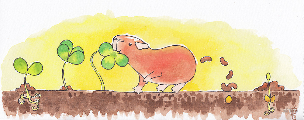 Cute image of guinea pig pooping--the cycle of life--at the Guinea Pig Market