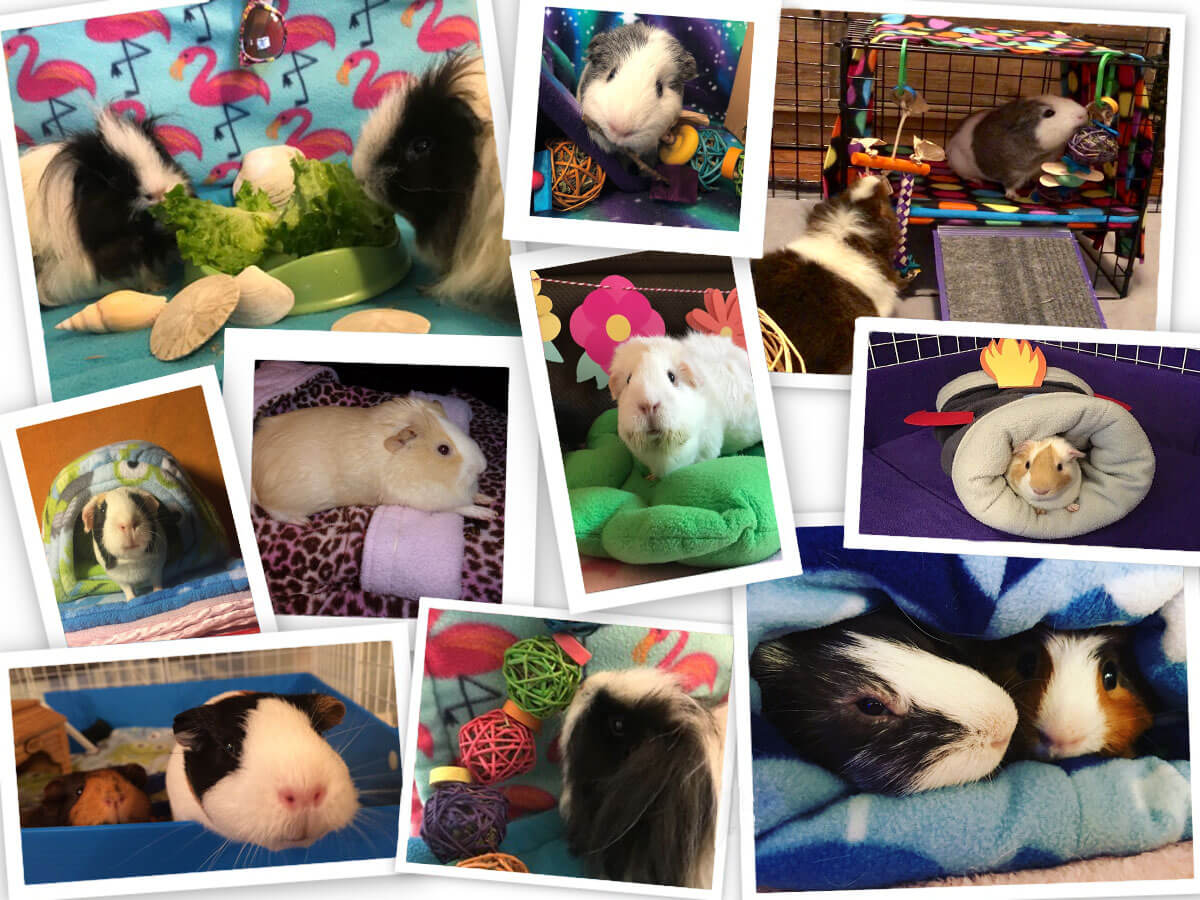 Out of this World Photo Contest at Guinea Pig Market