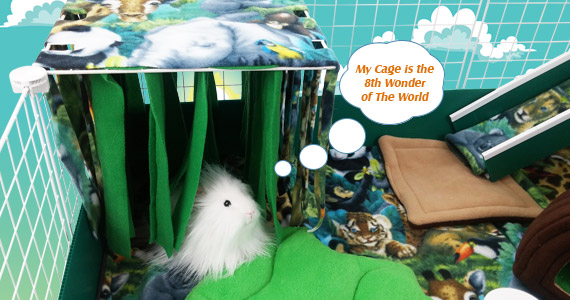 Create a Natural Paradise for Your Piggies