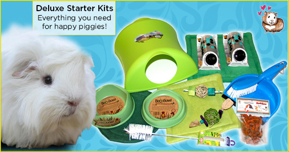 Starter Kits for Happy Piggies