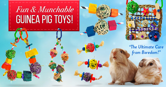 toys for guinea pigs