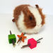 Munch the Galaxy toy set of 3 with a guinea pig