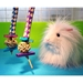 Jester Tester toy for guinea pigs and other small animals