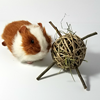 Timothy Tumbler Toy for Guinea Pigs