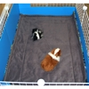 Guinea Pig Cage Liner for C&C Cage in 2x3 in Jungle fleece pattern