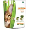 Pet Grass - wheat grass