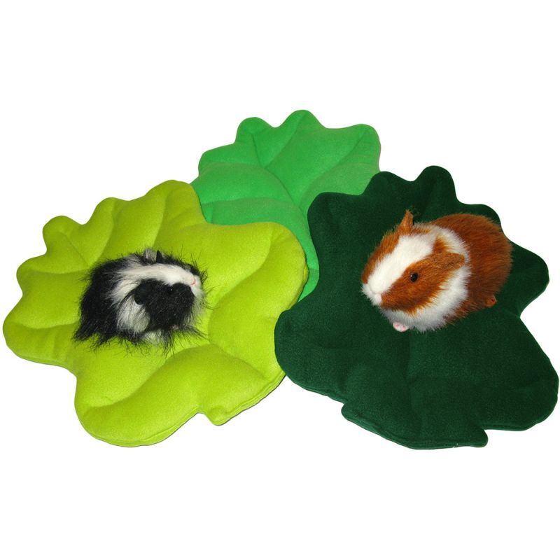 Lettuce Loungers with Guinea Pigs