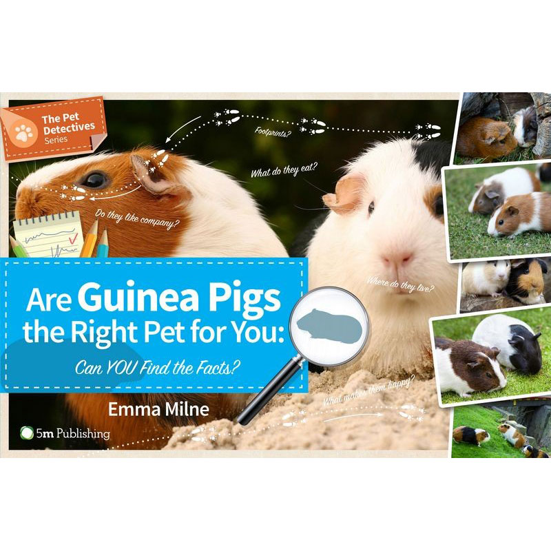 Are Guinea Pigs the Right Pet for You? Guinea Pig Care ...
